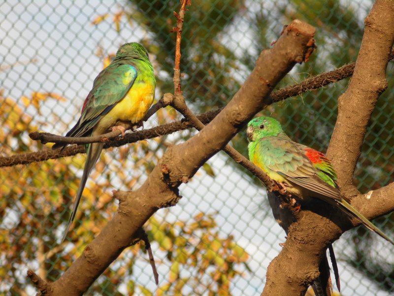 Hobi Burung Bukan Hanya Sekedar Peliharaan