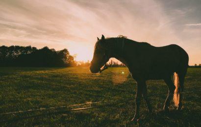 KunjungiWisata Peternakan Kuda Megastar