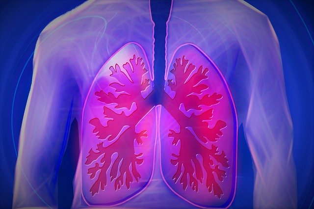 Ketahui Fungsi Alveolus Pada Sistem Pernafasan