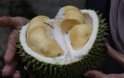 Durian Kupas, Tentang Kelebihan dan Kekurangannya